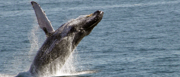 Cabo Rey - Whale Watching Tour